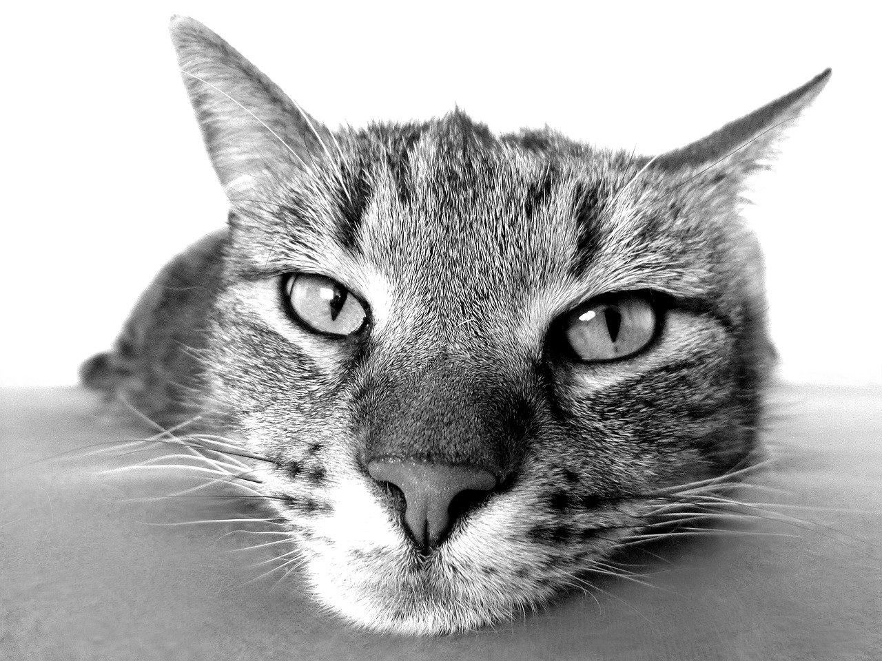 close up cat