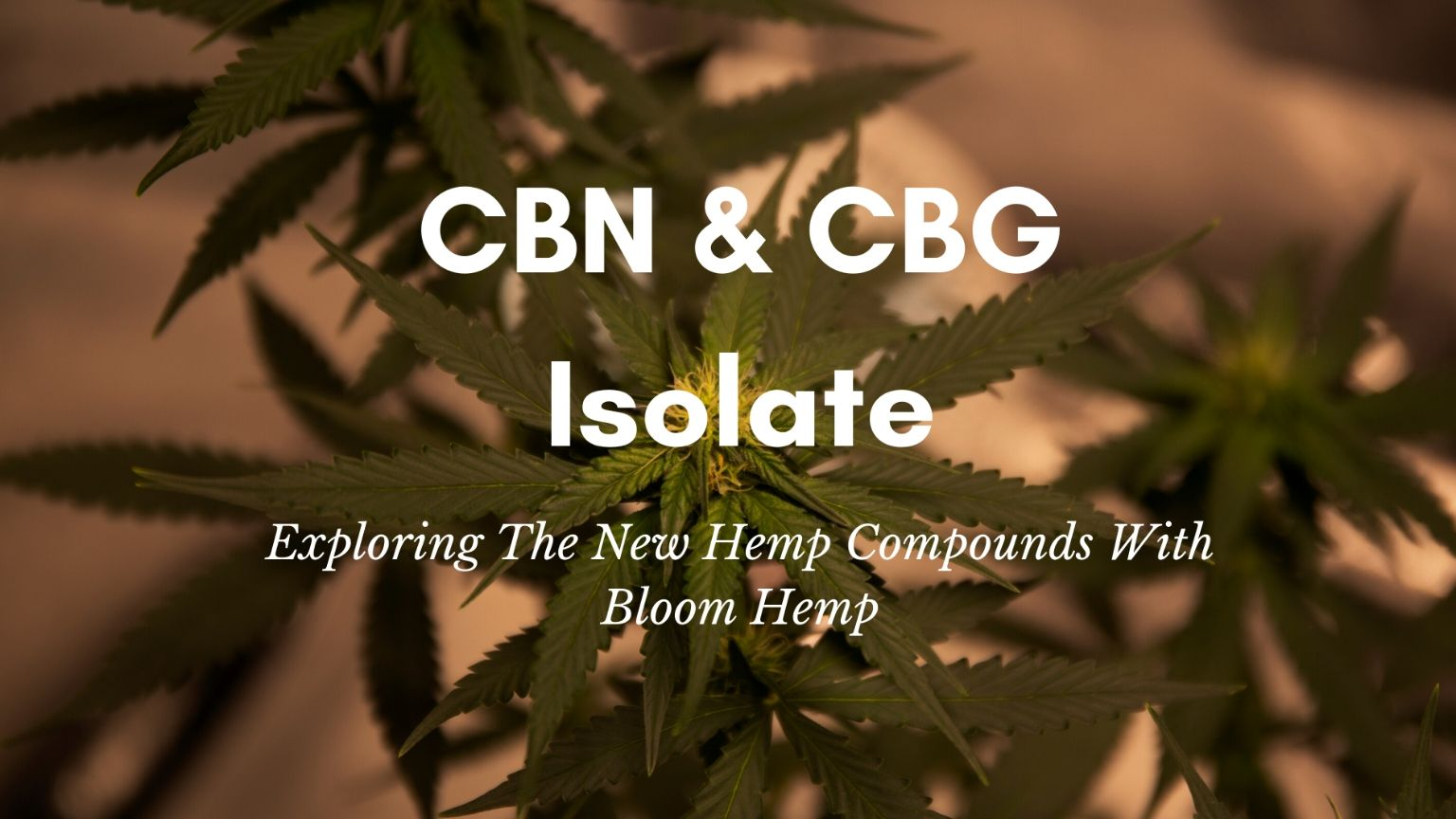 hemp plant and leaves