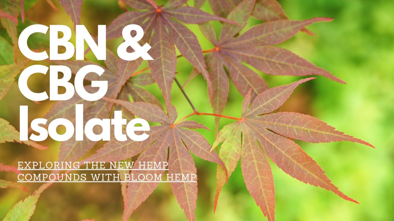 hemp leaves